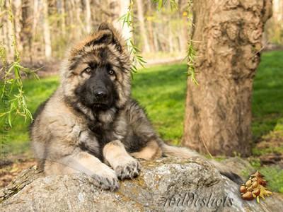 Puppy/Pet Registration